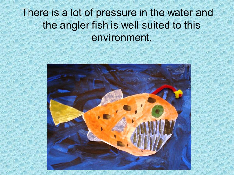 There is a lot of pressure in the water and the angler fish is well suited to this environment.