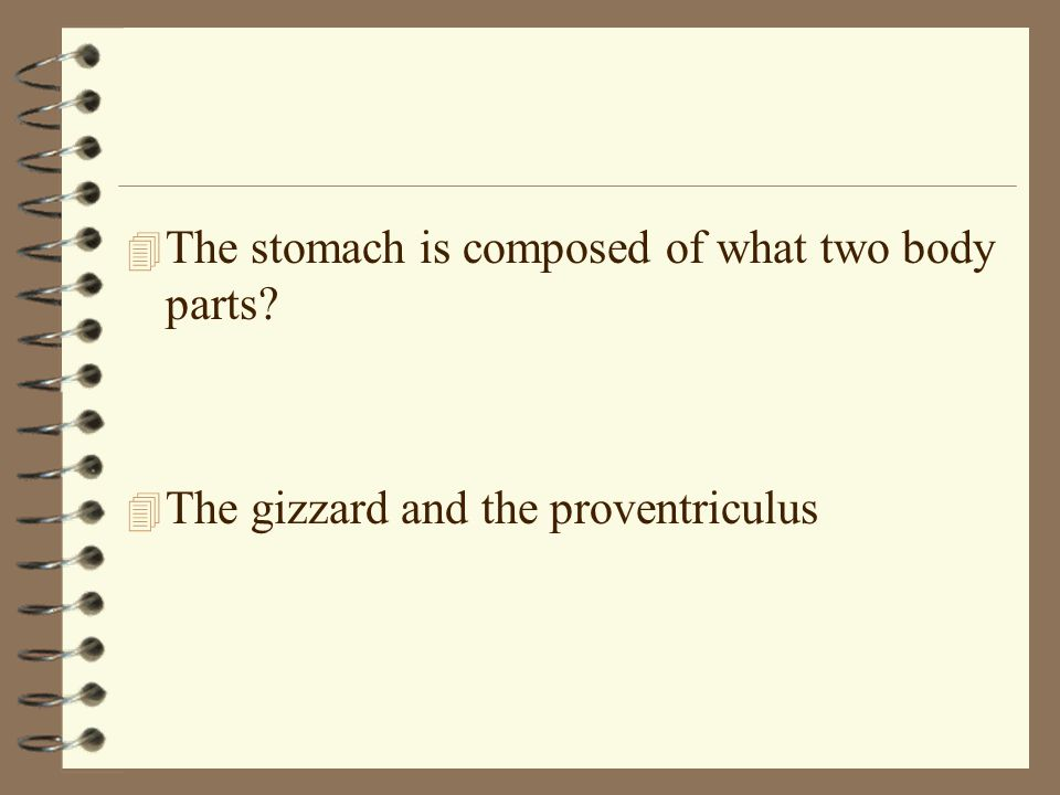 4 The stomach is composed of what two body parts? 4 The gizzard and the proventriculus