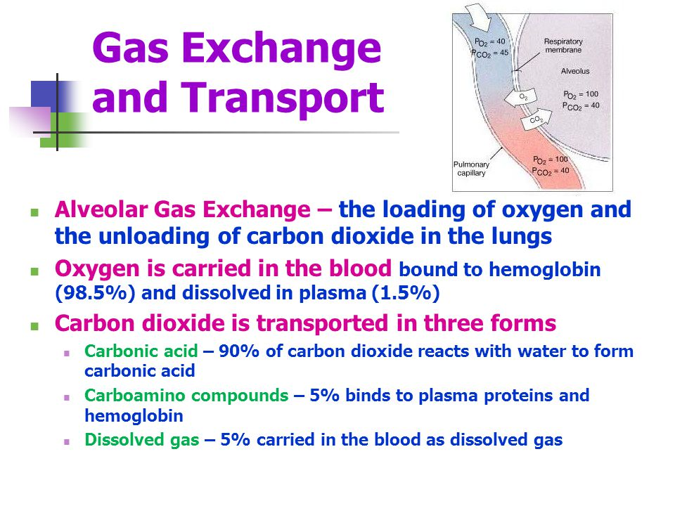 Gas Exchange and Transport Alveolar Gas Exchange – the loading of oxygen and the unloading of carbon dioxide in the lungs Oxygen is carried in the blo