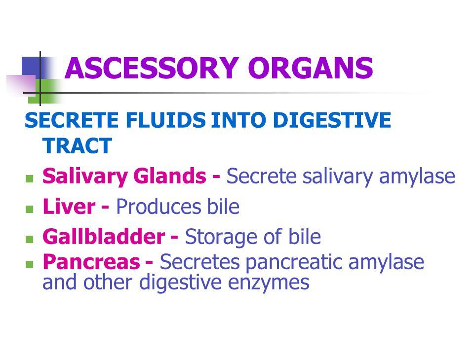 ASCESSORY ORGANS SECRETE FLUIDS INTO DIGESTIVE TRACT Salivary Glands - Secrete salivary amylase Liver - Produces bile Gallbladder - Storage of bile Pa