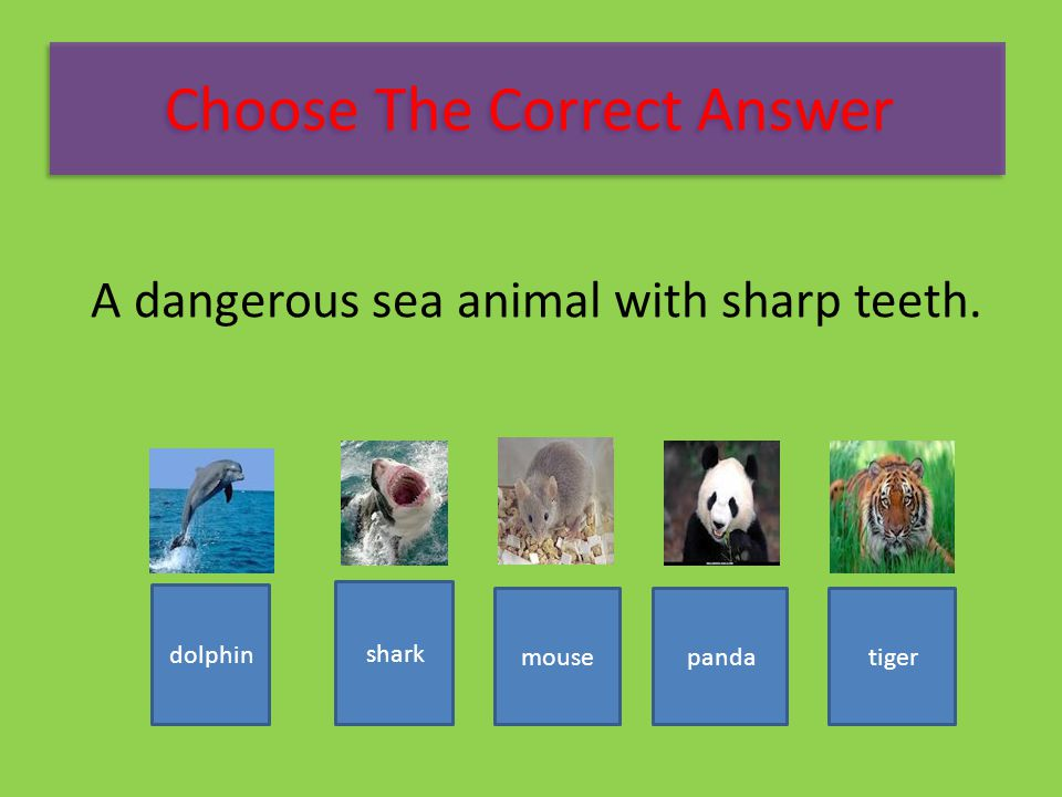A dangerous sea animal with sharp teeth. tigerpandamouse shark dolphin Choose The Correct Answer
