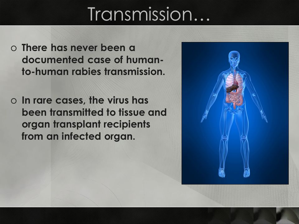 Transmission… o There has never been a documented case of human- to-human rabies transmission. o In rare cases, the virus has been transmitted to tiss
