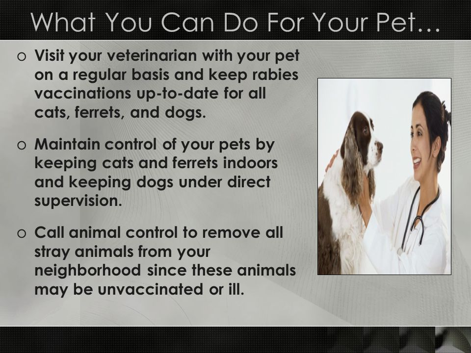 What You Can Do For Your Pet… o Visit your veterinarian with your pet on a regular basis and keep rabies vaccinations up-to-date for all cats, ferrets