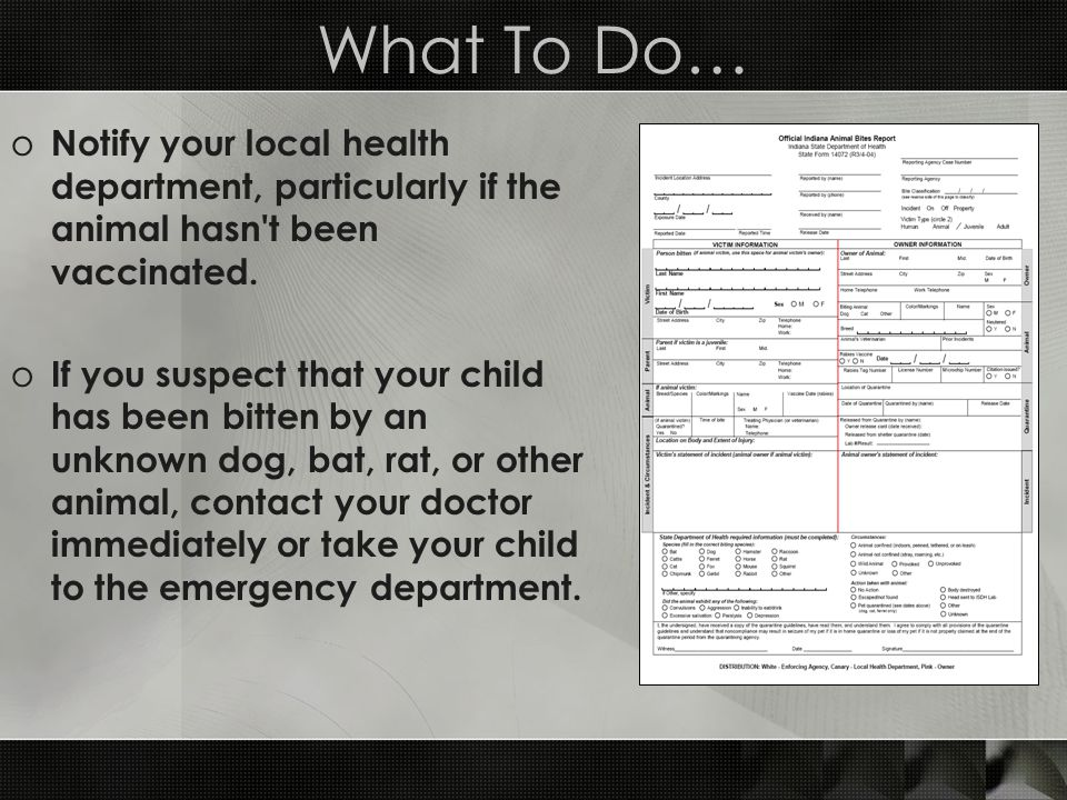 What To Do… o Notify your local health department, particularly if the animal hasn't been vaccinated. o If you suspect that your child has been bitten