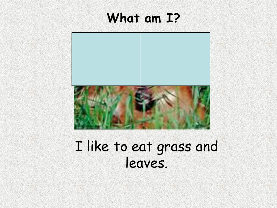 I like to eat grass and leaves. What am I?