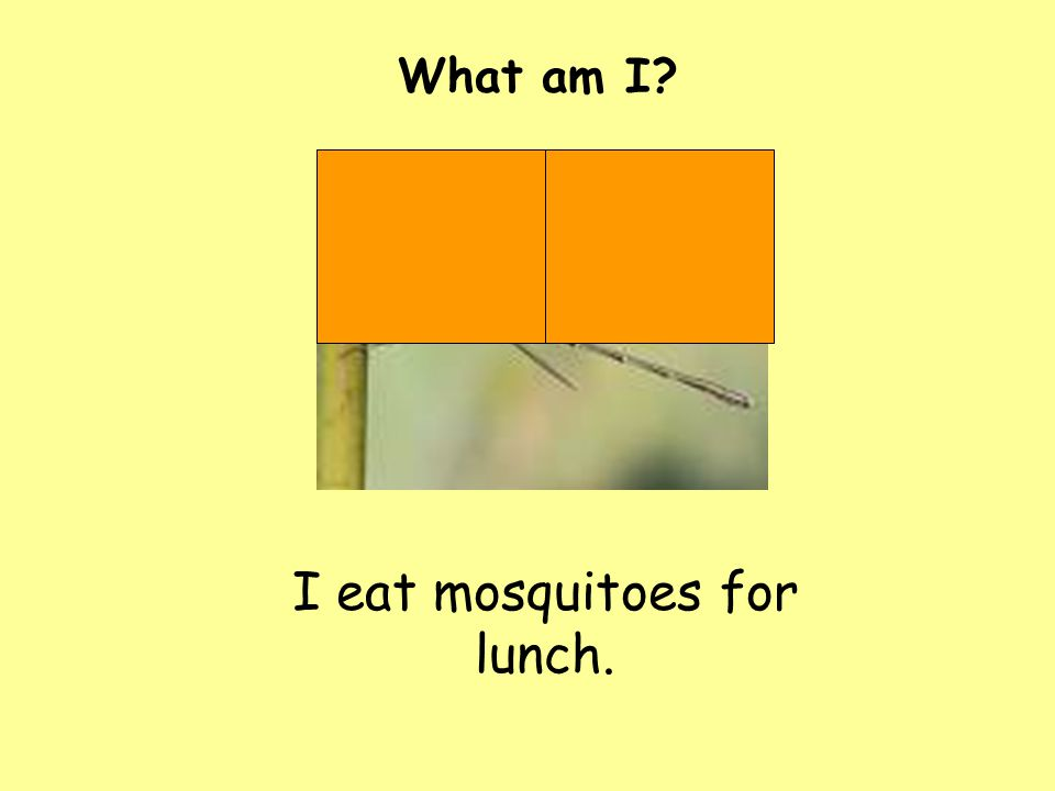 I eat mosquitoes for lunch. What am I?