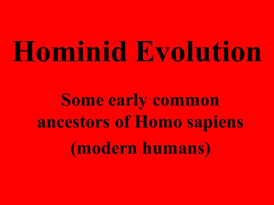 Hominid Evolution Some early common ancestors of Homo sapiens (modern humans)