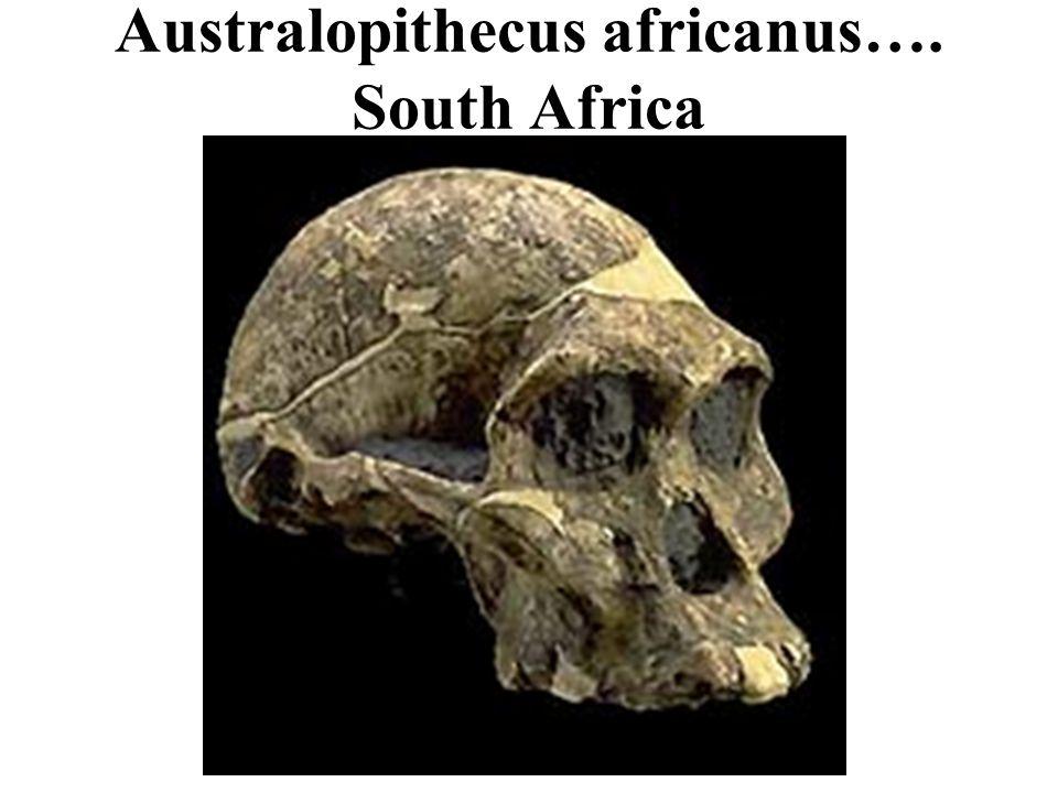 Australopithecus africanus…. South Africa