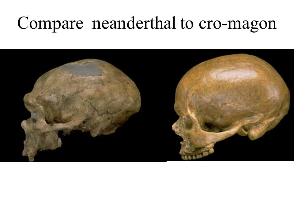 Compare neanderthal to cro-magon