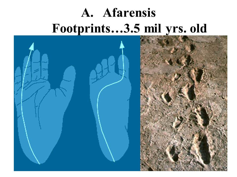 A.Afarensis Footprints…3.5 mil yrs. old