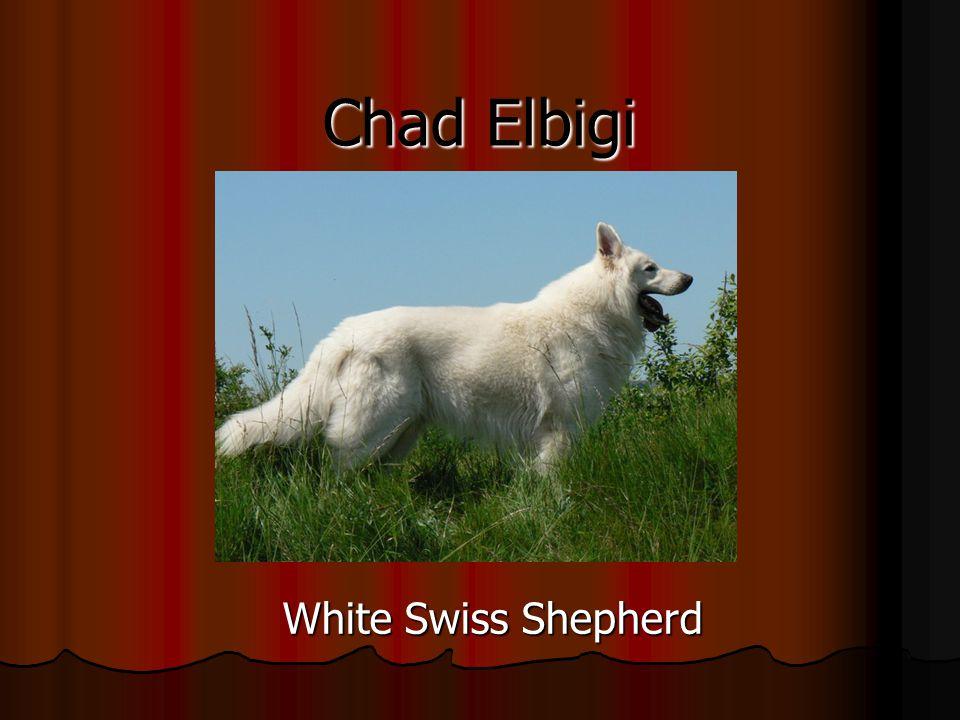 Chad Elbigi White Swiss Shepherd