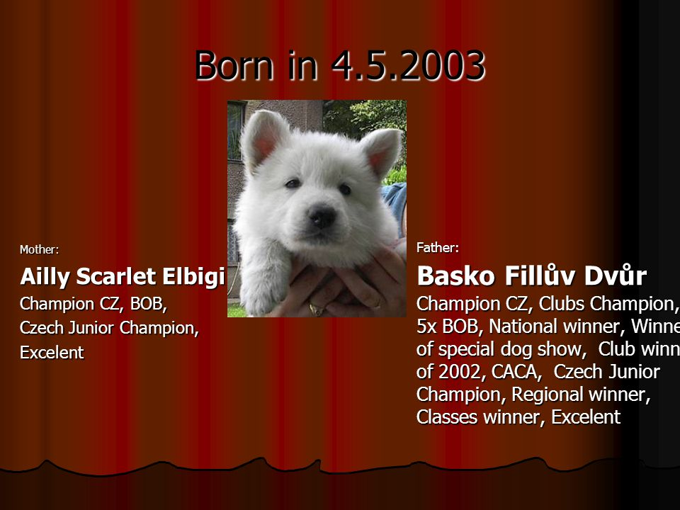 Born in Mother: Ailly Scarlet Elbigi Champion CZ, BOB, Czech Junior Champion, ExcelentFather: Basko Fillův Dvůr Champion CZ, Clubs Champion, 5x BOB, National winner, Winner of special dog show, Club winner of 2002, CACA, Czech Junior Champion, Regional winner, Classes winner, Excelent