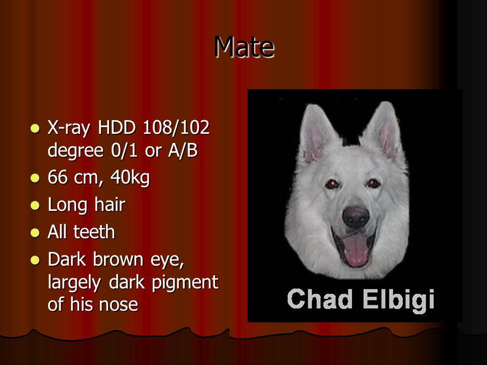 Mate X-ray HDD 108/102 degree 0/1 or A/B X-ray HDD 108/102 degree 0/1 or A/B 66 cm, 40kg 66 cm, 40kg Long hair Long hair All teeth All teeth Dark brow