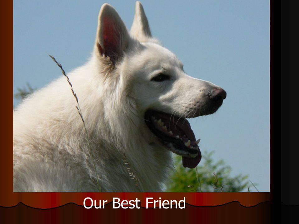 Prostě nejlepší kamarád Our Best Friend