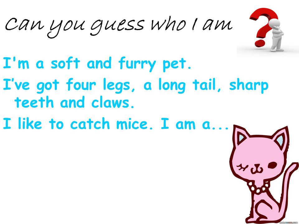 I'm a soft and furry pet. Ive got four legs, a long tail, sharp teeth and claws. I like to catch mice. I am a... Can you guess who I am