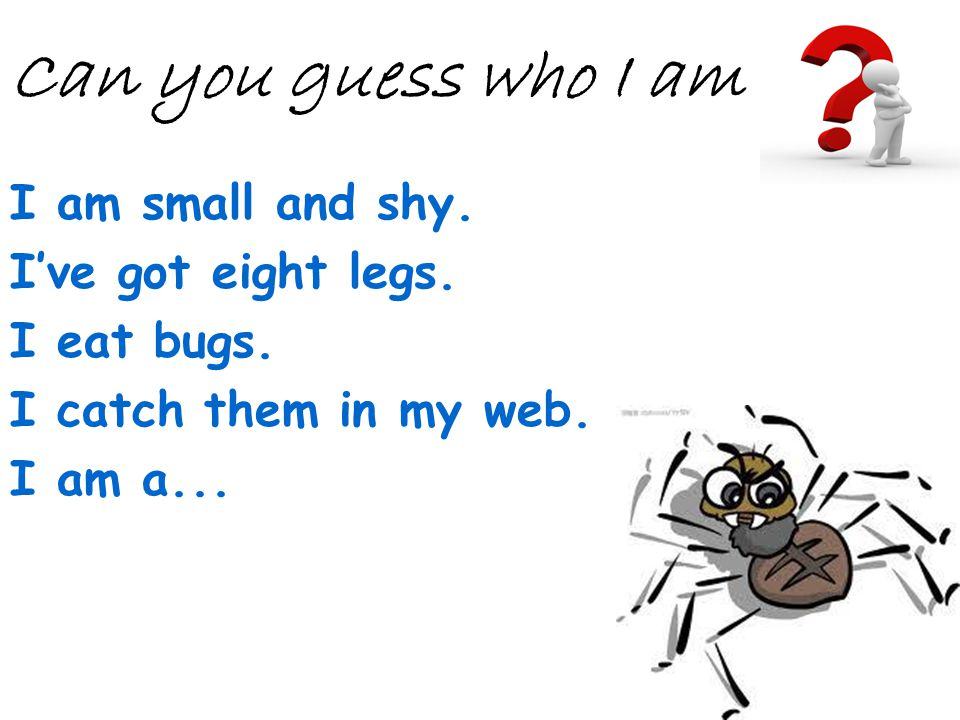 I am small and shy. Ive got eight legs. I eat bugs. I catch them in my web. I am a... Can you guess who I am