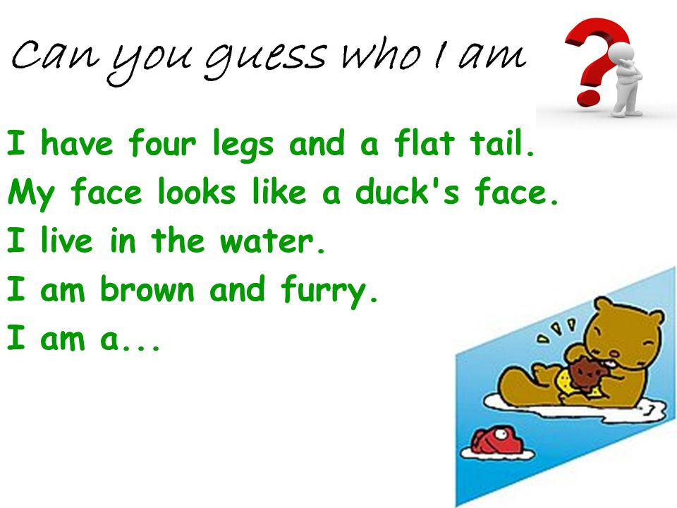 I have four legs and a flat tail. My face looks like a duck's face. I live in the water. I am brown and furry. I am a... Can you guess who I am