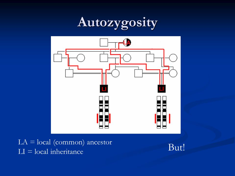 Autozygosity You only know part of the picture And What you dont know can be more important than what you do know DA = distant (common) ancestor DI = distant inheritance