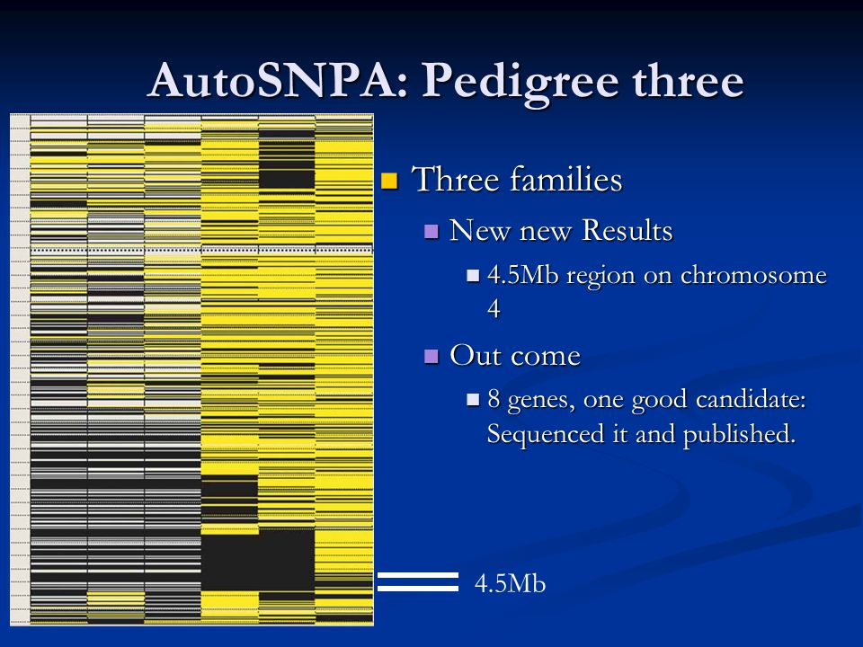 AutoSNPA: Pedigree three Three families Three families New new Results New new Results 4.5Mb region on chromosome 4 4.5Mb region on chromosome 4 Out come Out come 8 genes, one good candidate: Sequenced it and published.