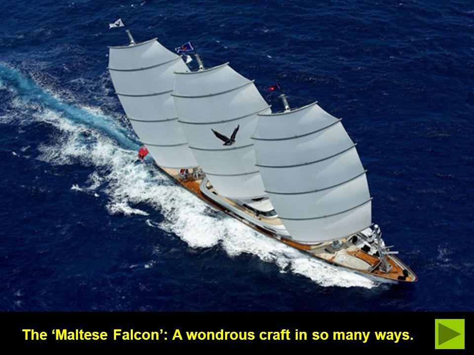 Falcon in namesake waters: Valletta, Malta.