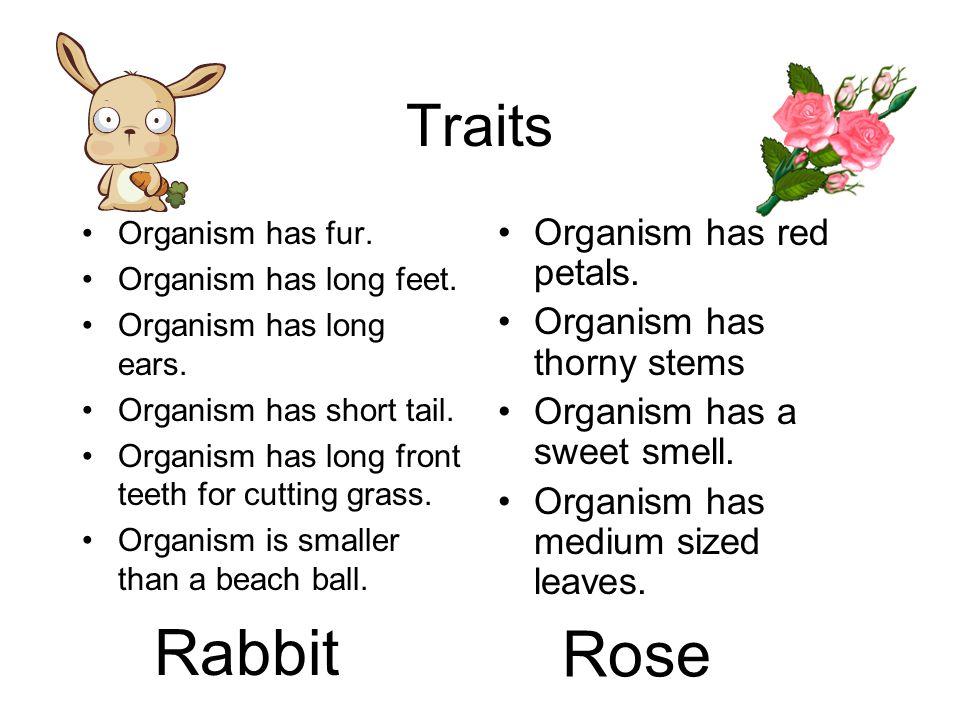 Inherited Traits and Adaptive Characteristics Life Science Lesson 2 TEKS: 5.9A, 5.9C, 5.10A, 5.10B