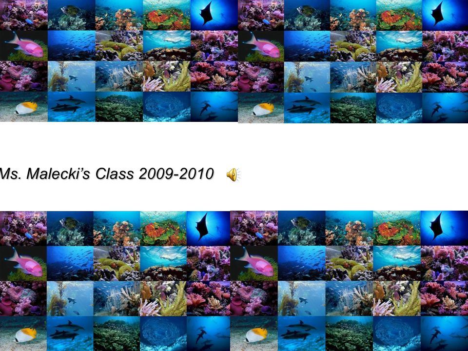 OCEANLIFE A Powerpoint Presentation by Ms. Maleckis Class 2009-2010