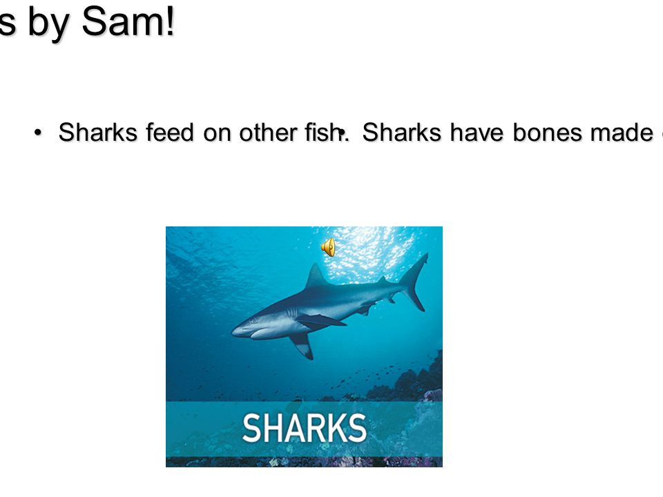 Sharks by Sam. Sharks feed on other fish.Sharks feed on other fish.