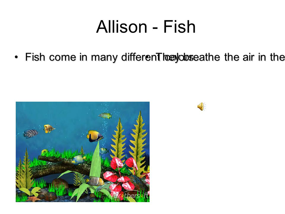 Fish come in many different colors.Fish come in many different colors.