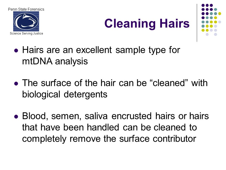 Penn State Forensics Science Serving Justice Cleaning Hairs Hairs are an excellent sample type for mtDNA analysis The surface of the hair can be cleaned with biological detergents Blood, semen, saliva encrusted hairs or hairs that have been handled can be cleaned to completely remove the surface contributor