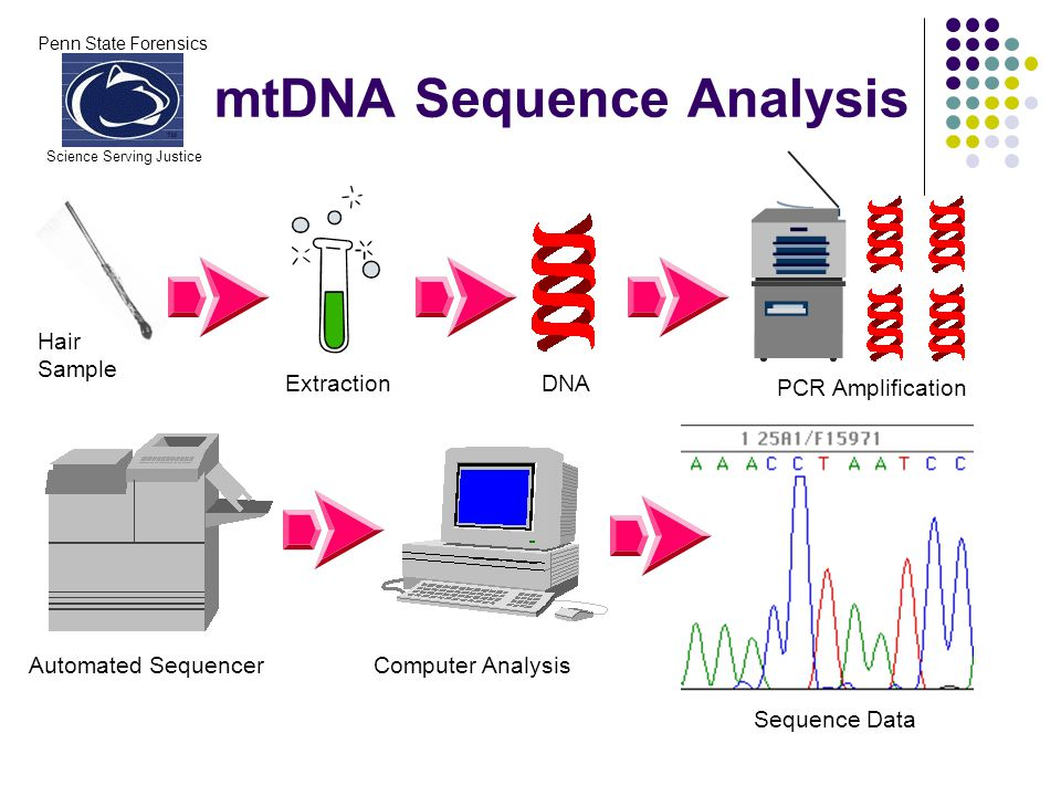 Penn State Forensics Science Serving Justice mtDNA Sequence Analysis Hair Sample ExtractionDNA PCR Amplification Automated SequencerComputer Analysis