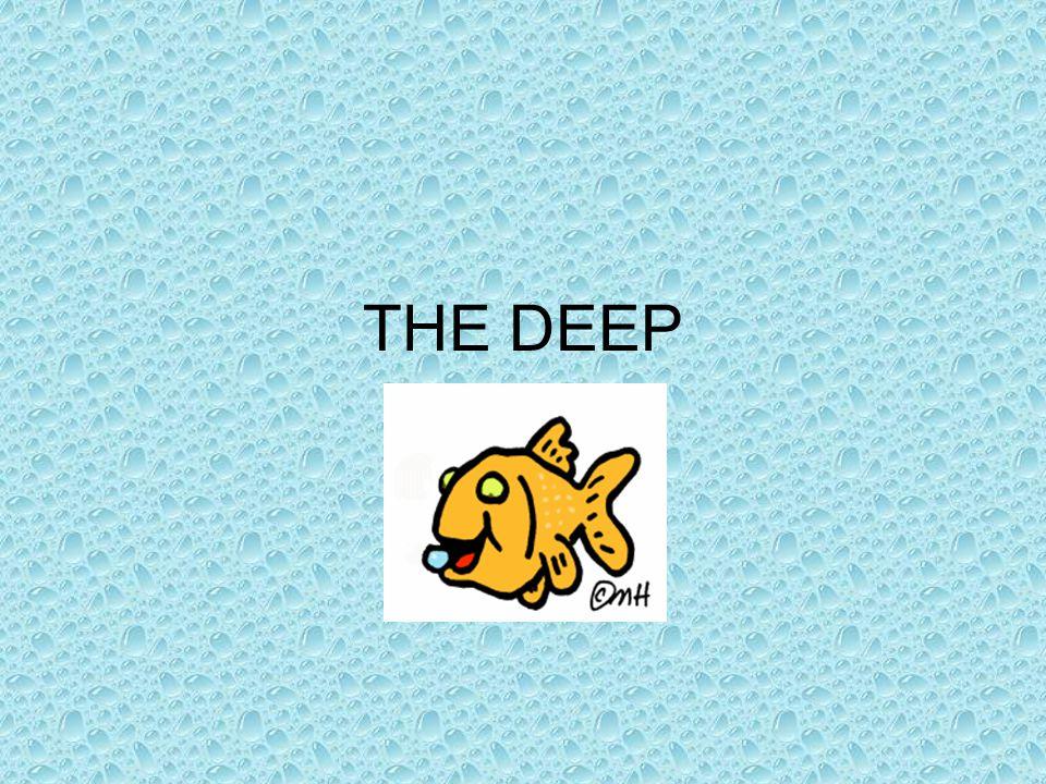 Aphotic Zone (Deep Pelagic) Below 1000m (3280 ft) Explored < 1%