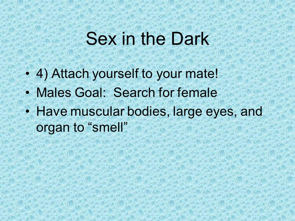 Sex in the Dark 4) Attach yourself to your mate! Males Goal: Search for female Have muscular bodies, large eyes, and organ to smell