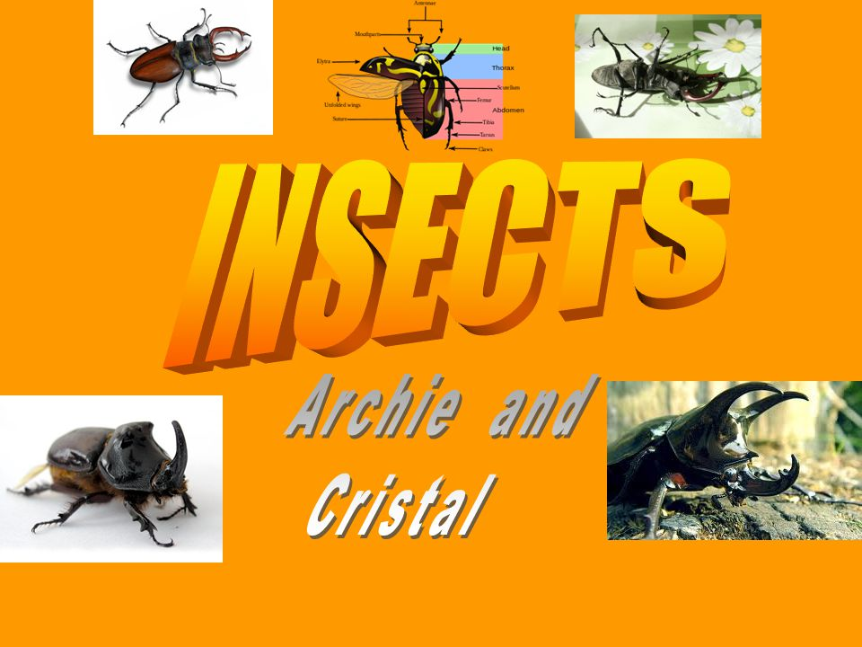 All insects names Beetle Beetle Butterfly Butterfly Bee Bee Fly Fly Grasshopper Grasshopper Dragonflies Dragonflies