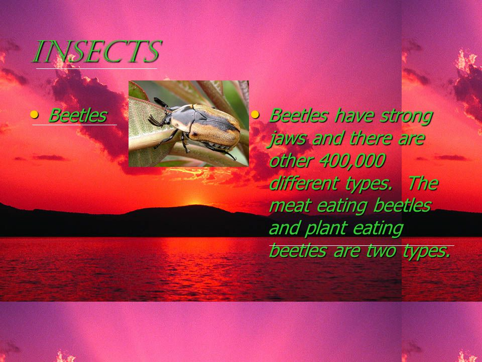 Insects Beetles Beetles Beetles have strong jaws and there are other 400,000 different types.