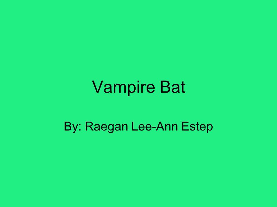 Vampire Bat By: Raegan Lee-Ann Estep