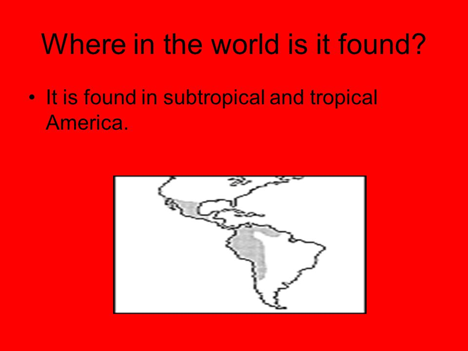Where in the world is it found? It is found in subtropical and tropical America.