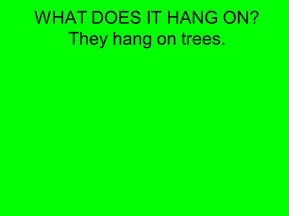 WHAT DOES IT HANG ON? They hang on trees.