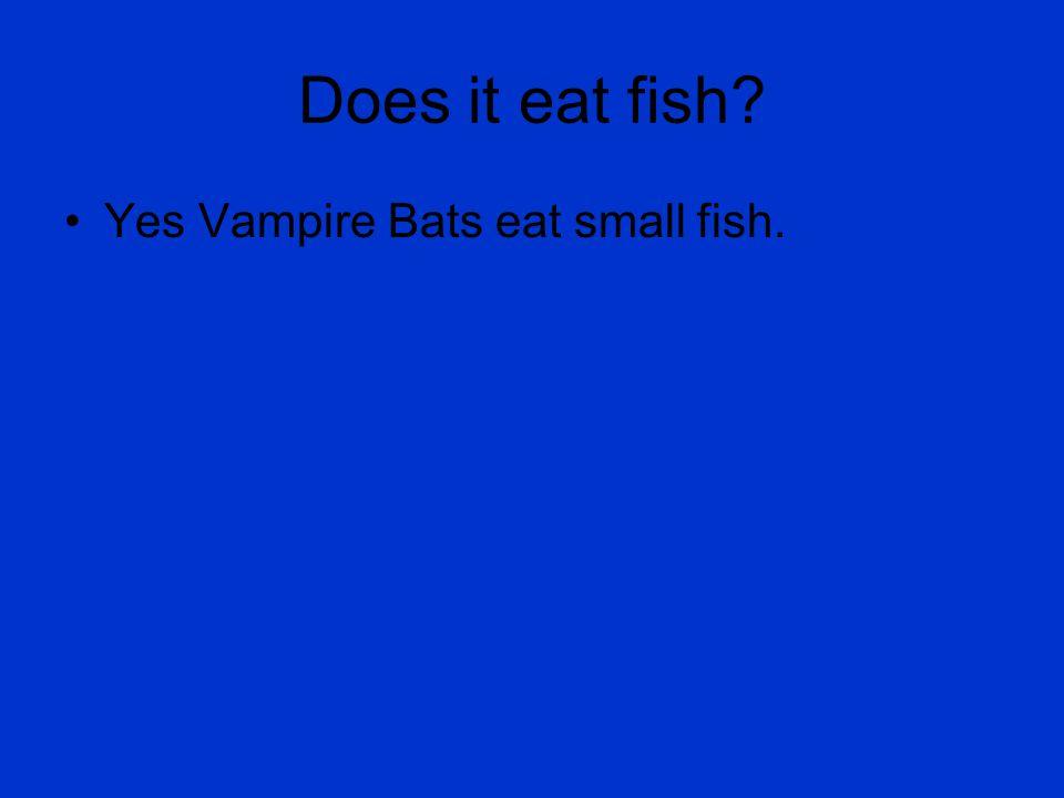 Does it eat fish? Yes Vampire Bats eat small fish.