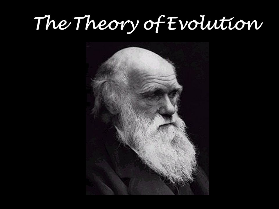 How are Biological Molecules a Record of Evolution.