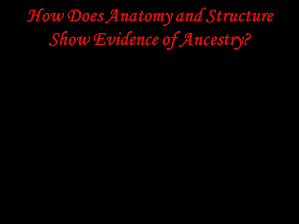 How Does Anatomy and Structure Show Evidence of Ancestry? Comparing the anatomy of different types of organisms often reveals basic similarities in bo
