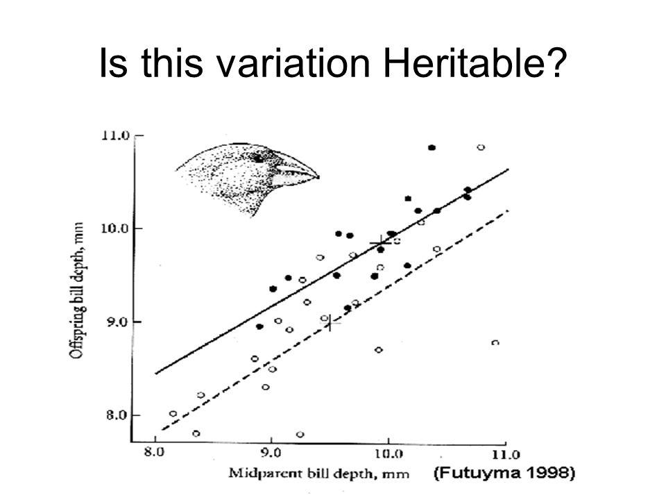 Vestigial Pelvis of the Whale