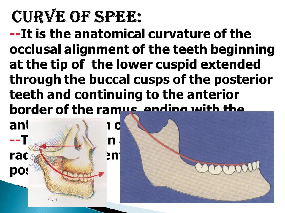 Curve of Spee: --It is the anatomical curvature of the occlusal alignment of the teeth beginning at the tip of the lower cuspid extended through the b
