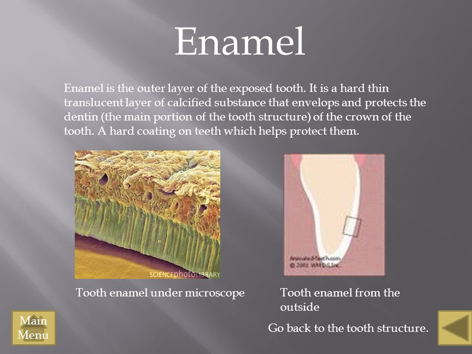 Tooth enamel under microscope Enamel Enamel is the outer layer of the exposed tooth. It is a hard thin translucent layer of calcified substance that e