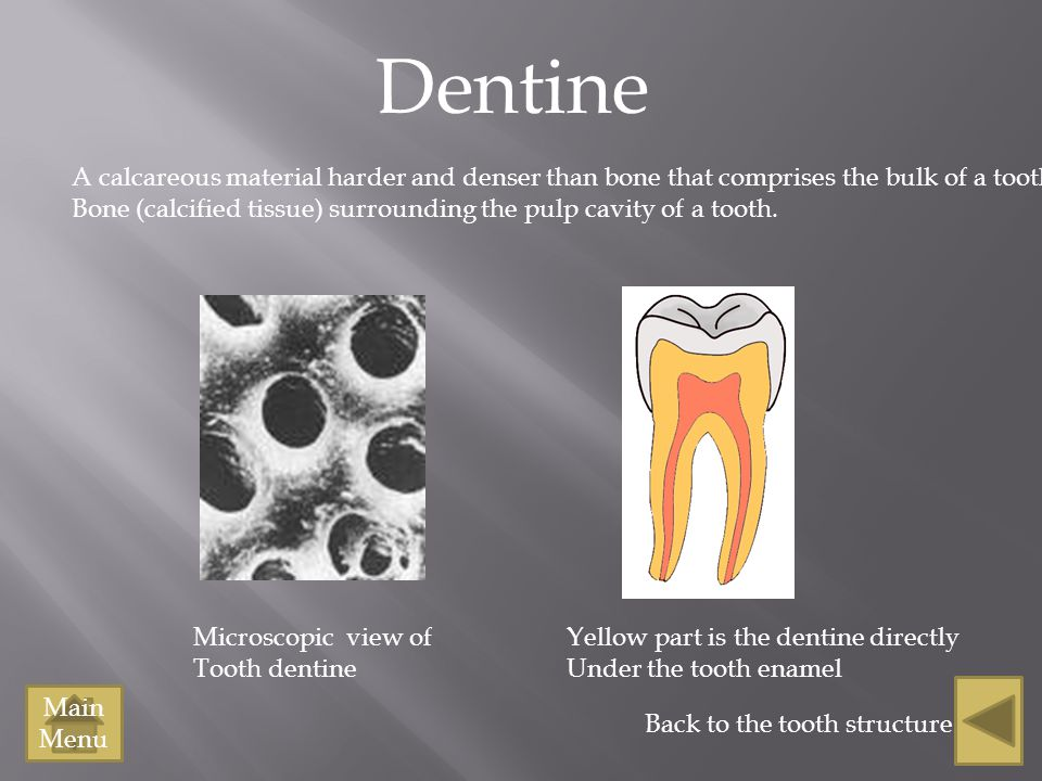Dentine A calcareous material harder and denser than bone that comprises the bulk of a tooth. Bone (calcified tissue) surrounding the pulp cavity of a