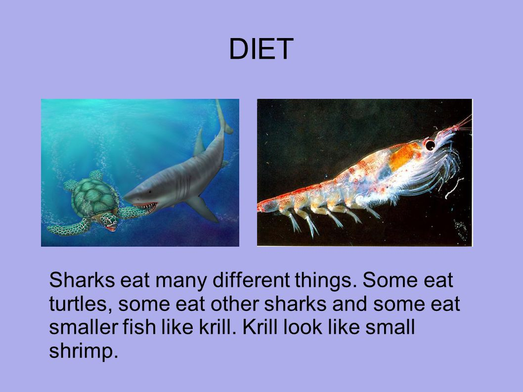 DIET Sharks eat many different things.