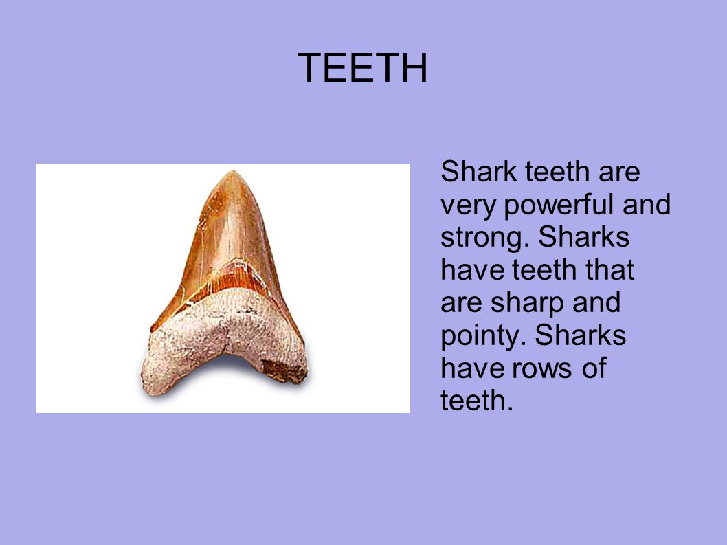 TEETH Shark teeth are very powerful and strong. Sharks have teeth that are sharp and pointy.