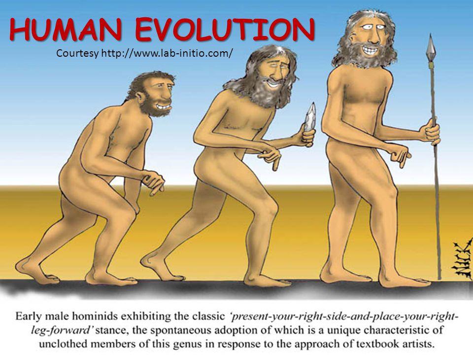 HUMAN EVOLUTION Courtesy http://www.lab-initio.com/