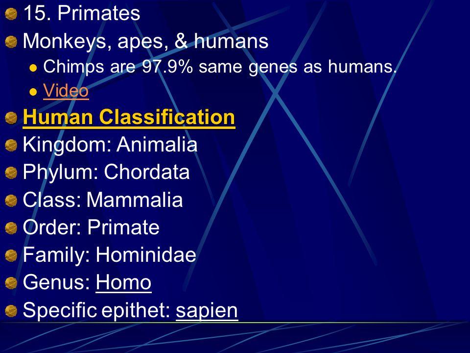 12. Perissodactyla Have an odd # of toes (ungulates) Ungulates are hoofed mammals. Horses, zebras, rhinos Video 13. Artiodactyla Even # or ungulates &