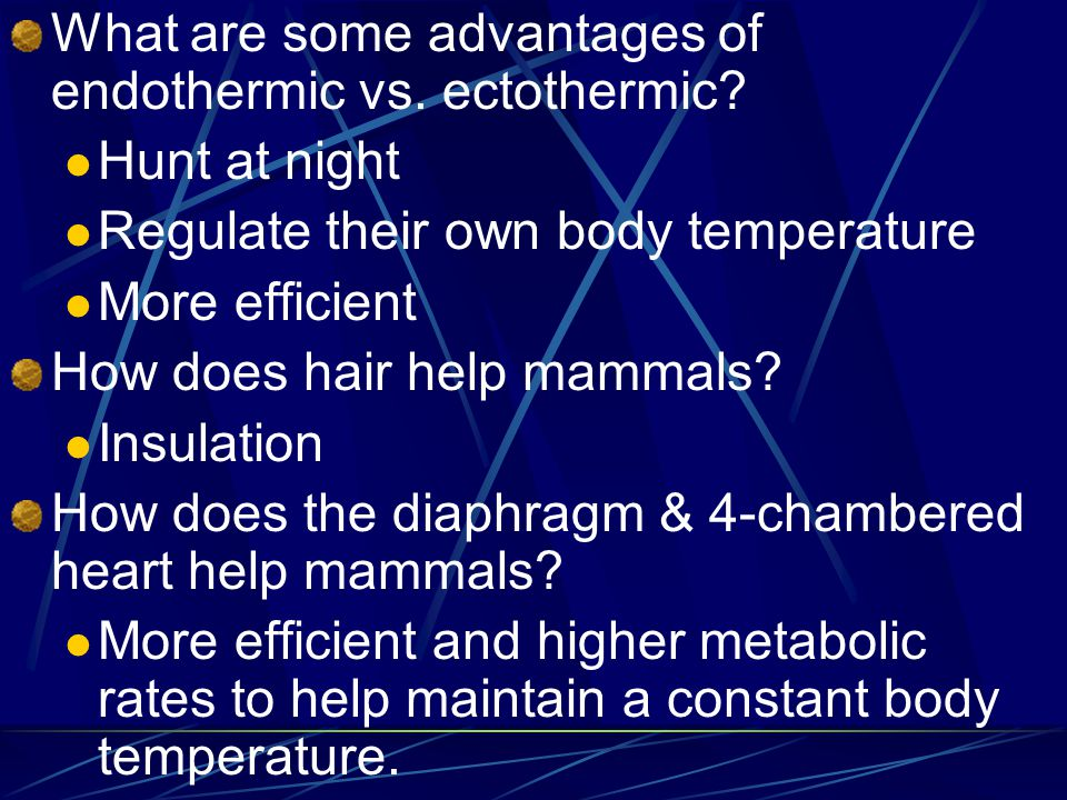 Mammal Characteristics 1. Hair 2. Endothermic 4-chambered heart Diaphragm to aid in breathing Mainly viviparous Mammary glands Highly developed brain