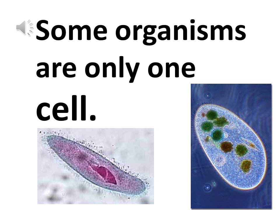 All organisms are made of tiny living units called cells.